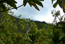 Sounds of Maunawili Trail, Oahu, Hawaii