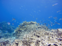 Video of the Fish Bowl Snorkel Site, Palau